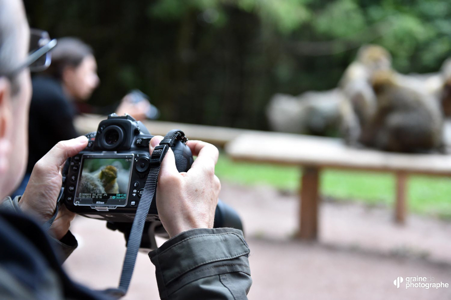 SAFARI Photo en Alsace Singes