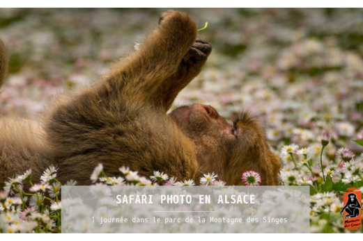 Safari Photo en Alsace